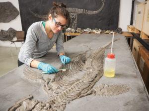 Lange Nacht der Museen Stuttgart - Museum am Loewentor Restaurierung Fischsaurier Cristina Gasco Martin 2